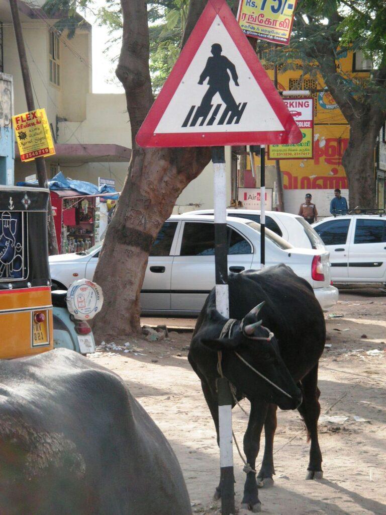 Strassenszene mit Kuh